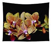 Elegant Orchid On Black Tapestry