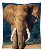 Elephant Approaching Tapestry