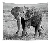 Elephant Happy And Free In Black And White Tapestry