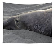 Elephant Seal 5 Tapestry