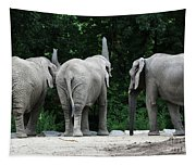 Elephant Trio Tapestry