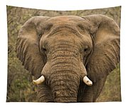 Elephant Watching Tapestry