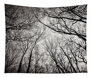 Entwined In The Sky Tapestry