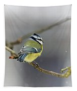 Eurasian Blue Tit With Snow Tapestry