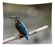 Eurasian Kingfisher Tapestry