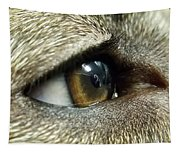 Eye Of The Canine Tapestry