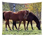 Horses Fall Grazing Tapestry