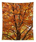 Fall In Kayloya Park 2 Tapestry