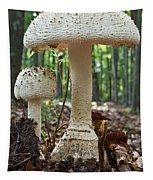 Father And Son Mushrooms Tapestry