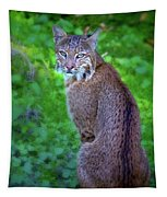 Female Bobcat Tapestry