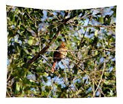 Female Cardinal IIi Tapestry