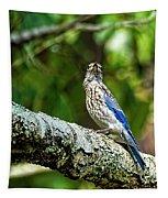 Female Eastern Bluebird Portrait Tapestry