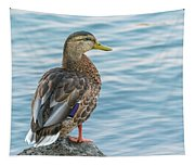 Female Mallard At The River Tapestry