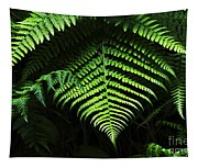 Fern Canyon California 1 Tapestry
