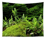 Ferns And Moss On The Ma At Tapestry