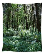Filtered Forest Sunlight In Oregon Tapestry