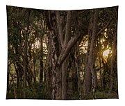Filtered Sunlight Tapestry