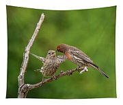 Finch Feeding Time I Tapestry