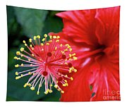 Fireworks - Hibiscus Tapestry