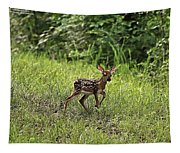 First Baby Fawn Of The Year Tapestry