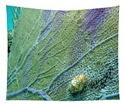 Flamingo Tongue Tapestry