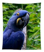 Flirty Birdy Tapestry
