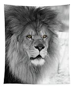 Fluffy Tango  Black And White  T O C Tapestry
