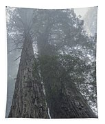 Foggy Redwoods Ca Tapestry