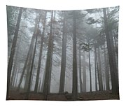 Foggy Sequoia National Park Tapestry