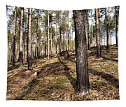 Forest Next Summer After A Fire Tapestry