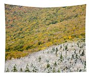 Franconia Notch State Park - White Mountains Nh Usa Autumn Tapestry