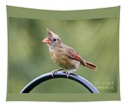 Friendly Female Cardinal  Tapestry