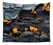 Fungi On Log Tapestry