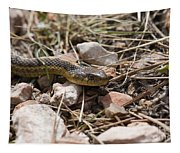 Garter Snake On The Trail In The Pike National Forest Of Colorad Tapestry