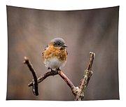 Gazing Eastern Bluebird Tapestry