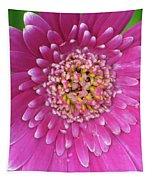 Gerber Daisy - Sweet Memories 01 Tapestry