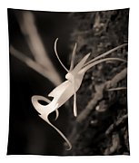 Ghost Orchid At First Light Tapestry