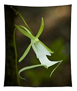 Ghost Orchid  Tapestry