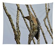 Gila Woodpecker Tapestry