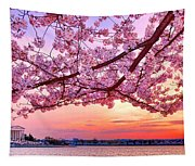 Glorious Sunset Over Cherry Tree At The Jefferson Memorial  Tapestry