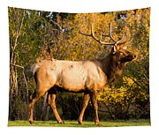 Golden Bull Elk Portrait Tapestry