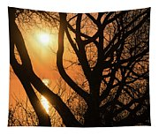 Gorgeous Morning Through The Tree Screen Tapestry