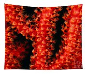 Gorgonian Coral Tapestry