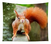 Got Nuts? Tapestry