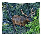 Grand Canyon # 33 - Grazing Elk Tapestry