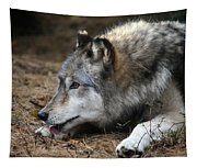 Gray Wolf Tapestry