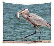 Great Blue Heron Walking With Fish #4 Tapestry