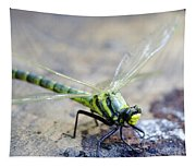 Green Dragonfly Tapestry
