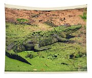 Green Gator With Border Tapestry
