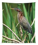 Green Heron At The Governor's Palace Gardens Tapestry
